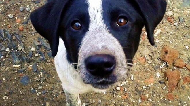 Adozione cani taglia medio grande