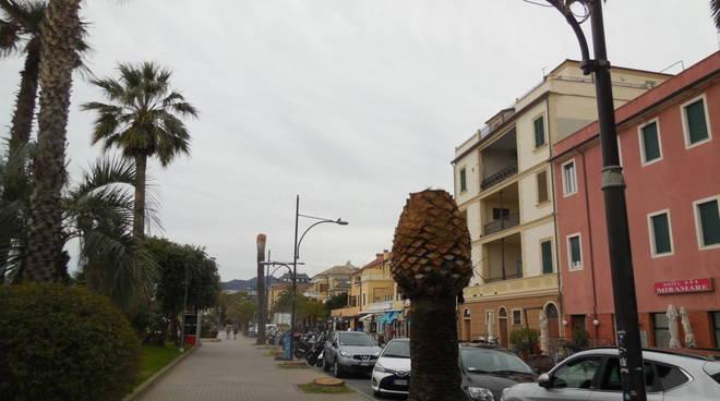 taglio palme pietra