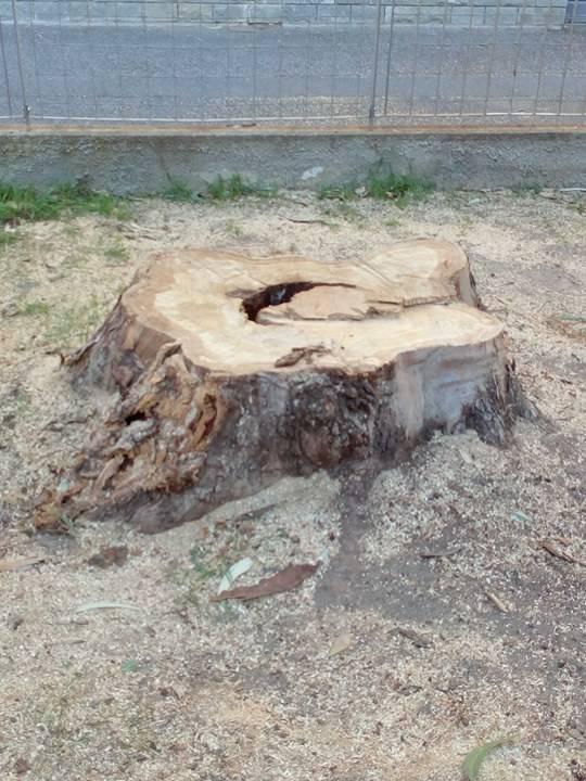 abbattimento alberi borghetto