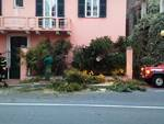 albero caduto aurelia borghetto