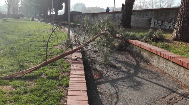 albero caduto trincee