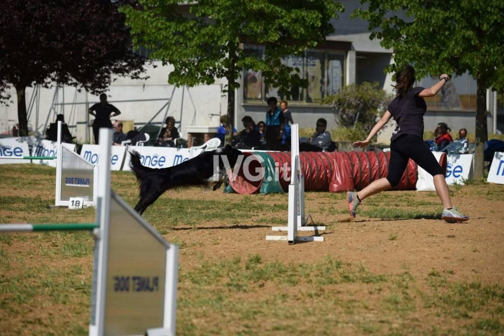 """Campionati mondiali a quattro zampe: una coppia """"young"""" tra i grandi"""