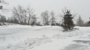 neve naso di gatto
