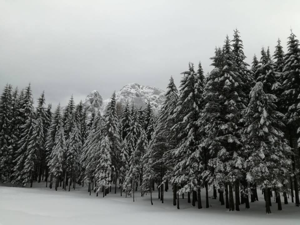 Parco dell'Aveto neve febbraio 2018
