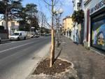 alberi albenga