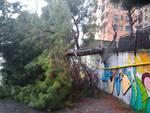 albero caduto in via Boeddu