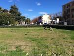 Area cani viale Pontelungo Albenga