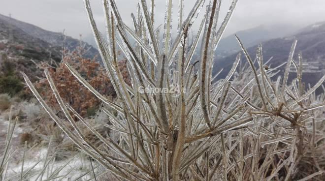 Bosco e macchia di ghiaccio