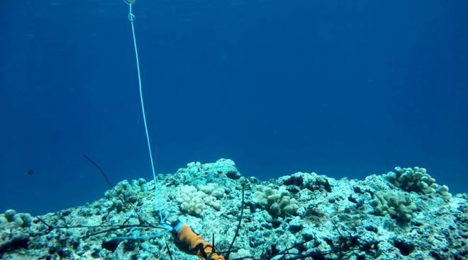 Un sensore di misura di altezza d'onda posizionato sulla barriera corallina.