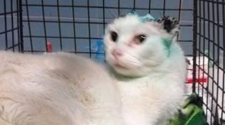 gatto quiliano