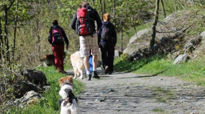 Camminata cani