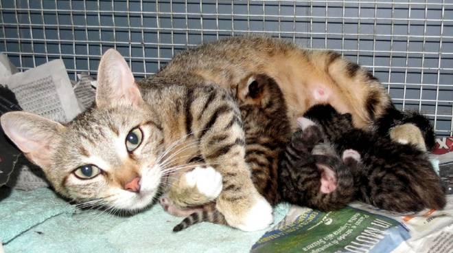 Festa della mamme gatte Enpa