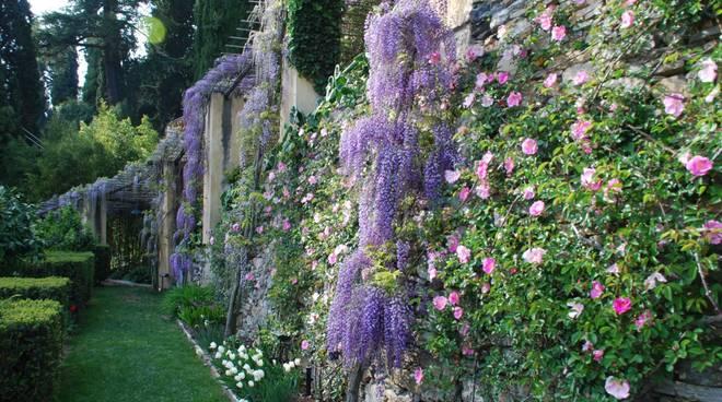Glicini Giardini di Villa della Pergola