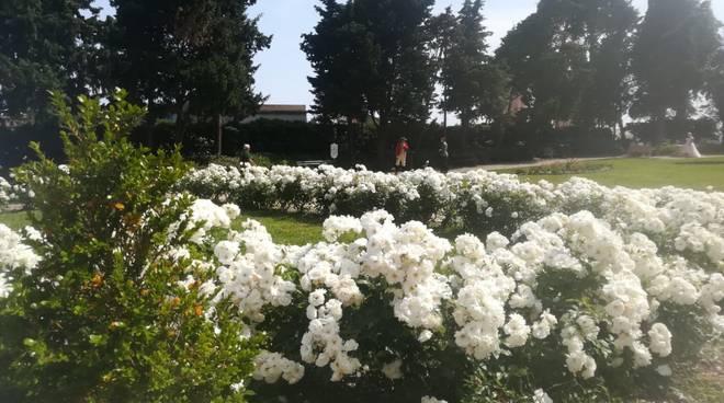 Medaglione floreale