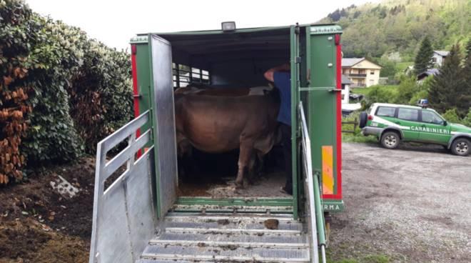trasporto animali,