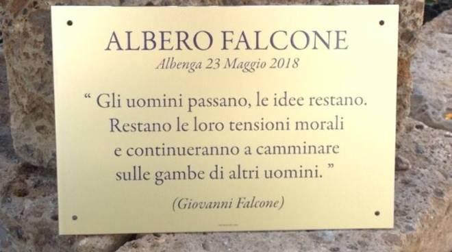 Albero Giovanni Falcone Albenga