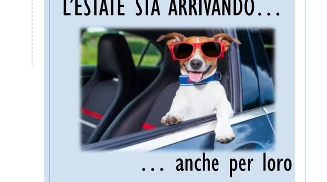 Anta Liguria Cani Auto