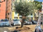 piazza matteotti albenga