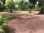 Riaperti i parchi di Nervi, ma c'è ancora il cantiere