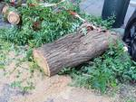 Albero caduto castelletto