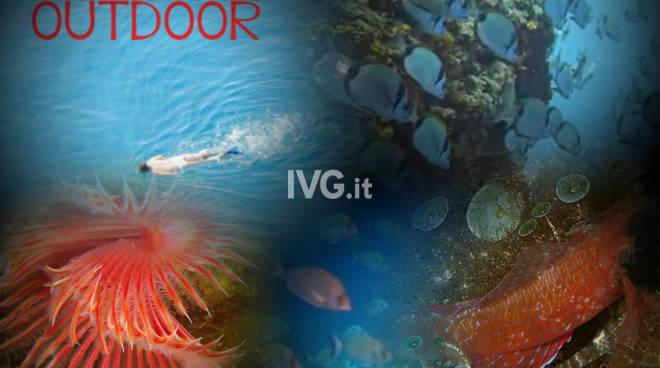 Escursione guidata di Snorkeling all\'Isola di Bergeggi