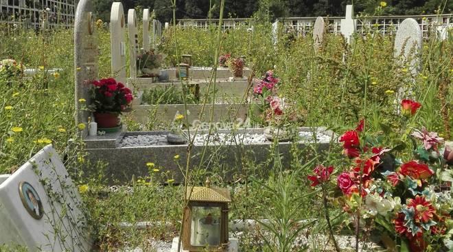 Erbacce al cimitero di staglieno
