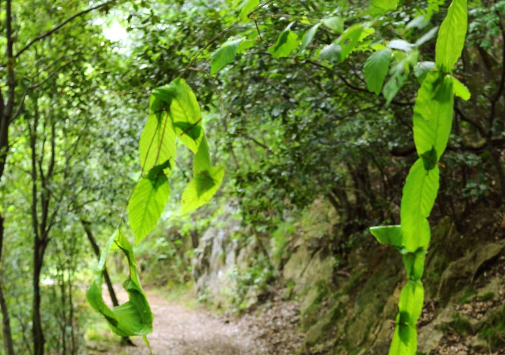 Landart escursionismo