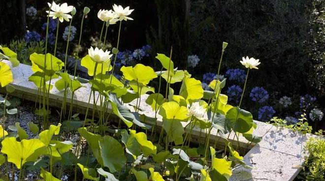 Loti e ninfee Giardini Villa Pergola Alassio