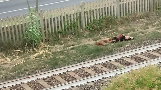Cani Treno Pietra Ligure