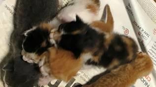 gattini pallare