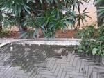 I vandali prendono di mira i giardini Charlie Chaplin ad Alassio