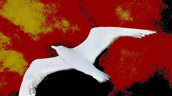 Mostra artista savonese Vittorio Patrone