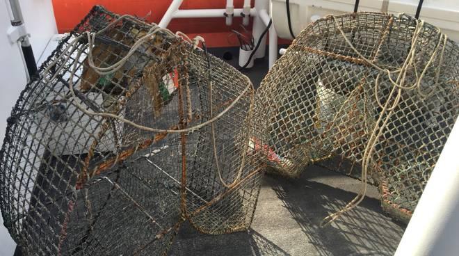 nasse pesca