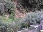 torrente sturla vegetazione e vipera