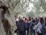 Camminata tra gli Olivi 2017