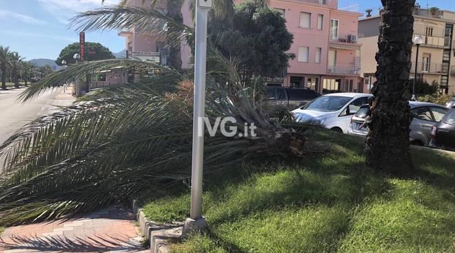 Il vento abbatte la parte superiore di una palma a Pietra Ligure
