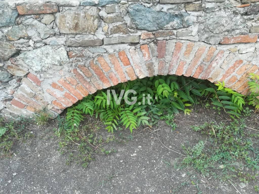 priamar vegetazione