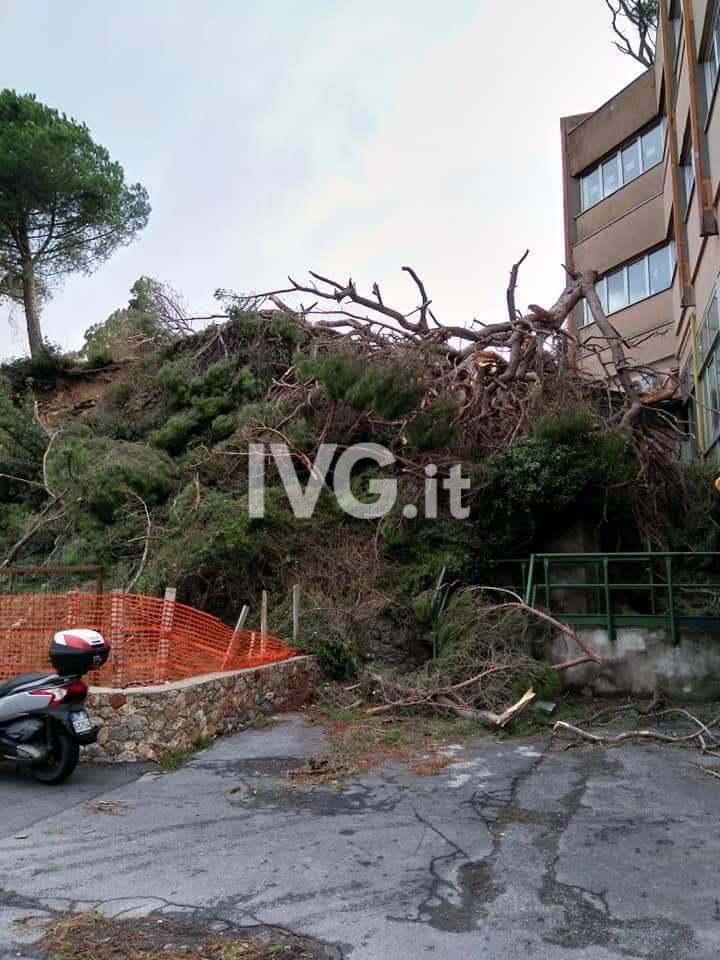 albero caduto alberghiero finale