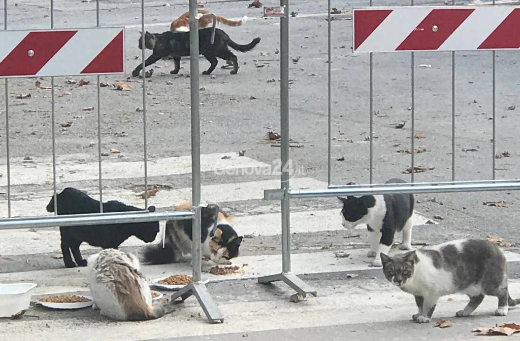 animali salvati ponte morandi