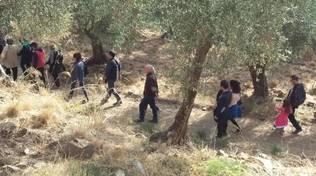 camminata tra gli ulivi