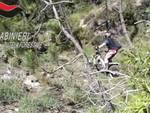 carabinieri forestali trial vietato