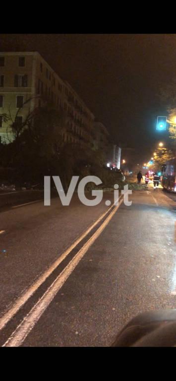Cade albero in corso Mazzini a Savona
