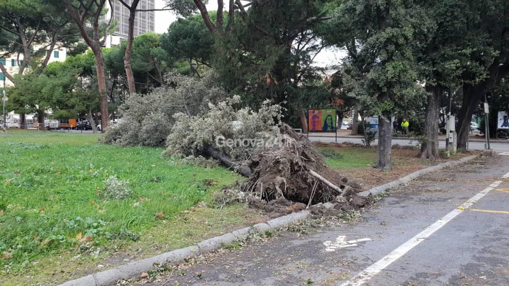 Crollato albero nei giardini di Brignole