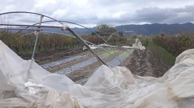 danni agricoltura maltempo