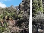 albero caduto alta tensione palo corrente luce blackout