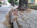 Borghetto alberi