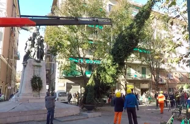L'albero di Natale dalla val di Fiemme a Certosa