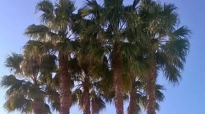 Palme alassio