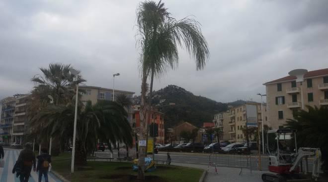palma arecastrum Albissola