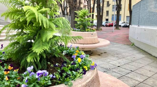 araucaria piazza Bologna